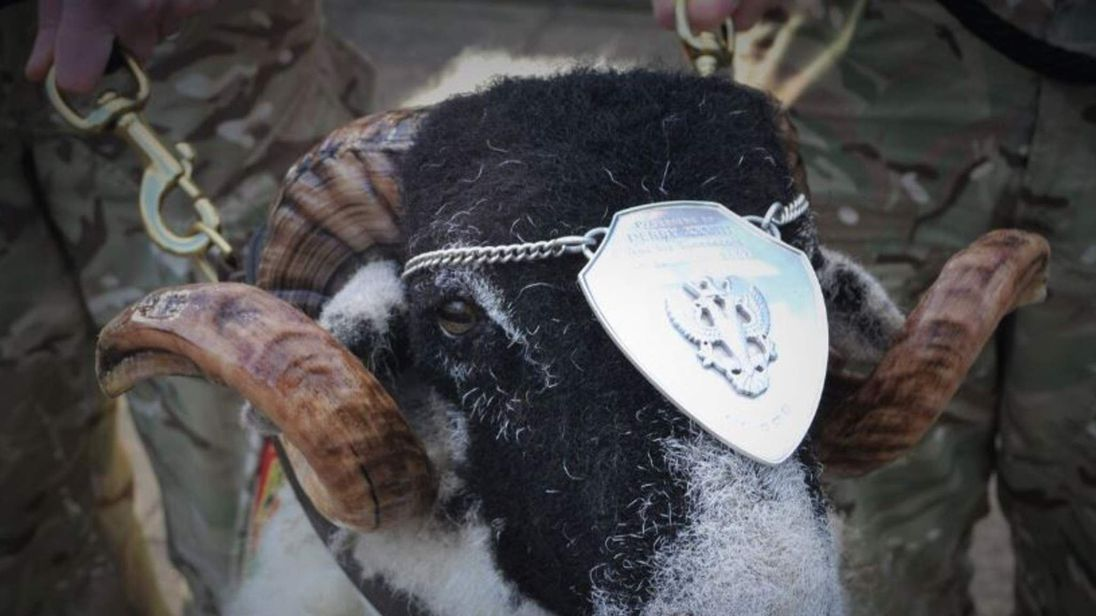 The Mercian Regiment's new mascot, Private Derby XXXI