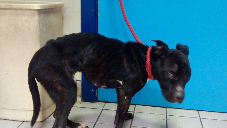 Emaciated dog rescued in Greater Manchester