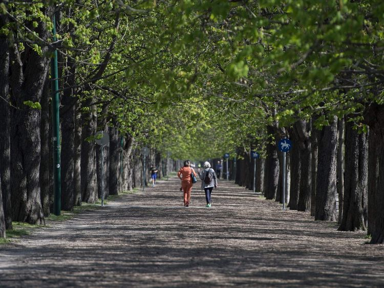 Couple walking on tree-lined path