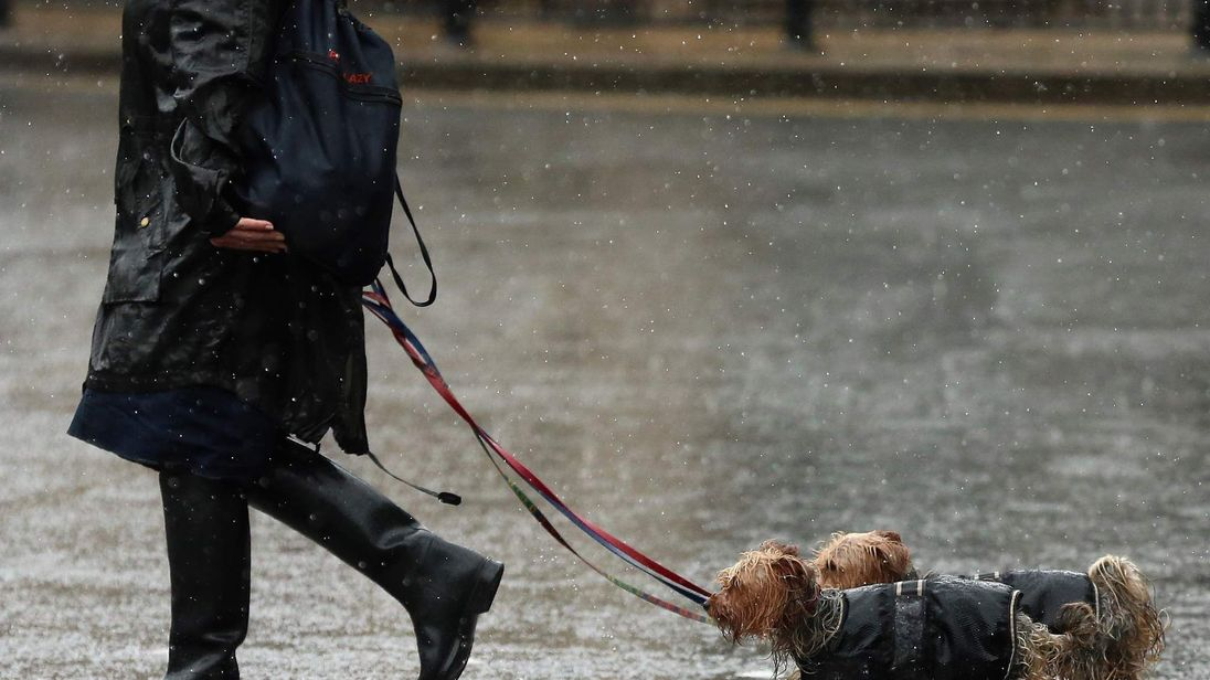 A woman walks her dogs in the rain