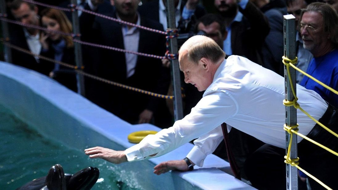 Russia's President Vladimir Putin reaches to touch a dolphin in 2013