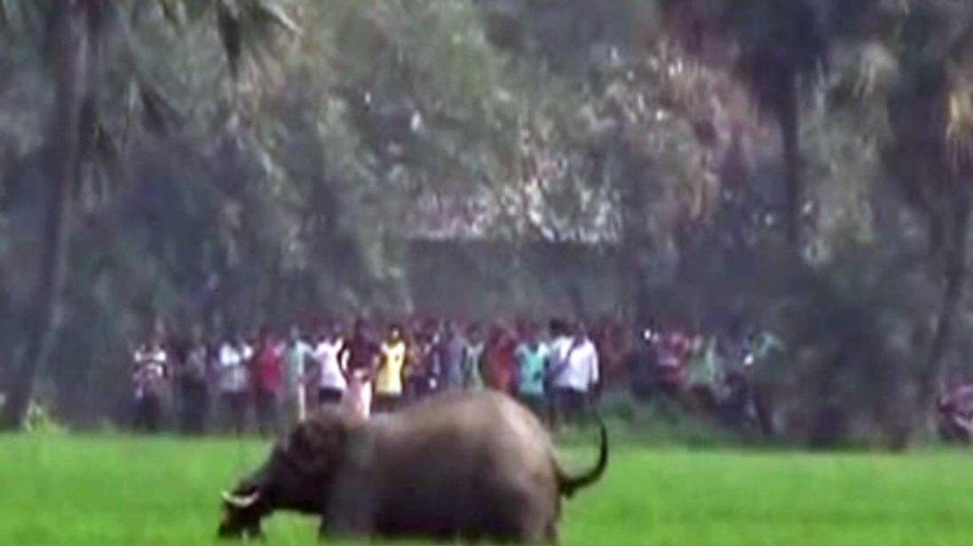 elephant rampage west Bengal