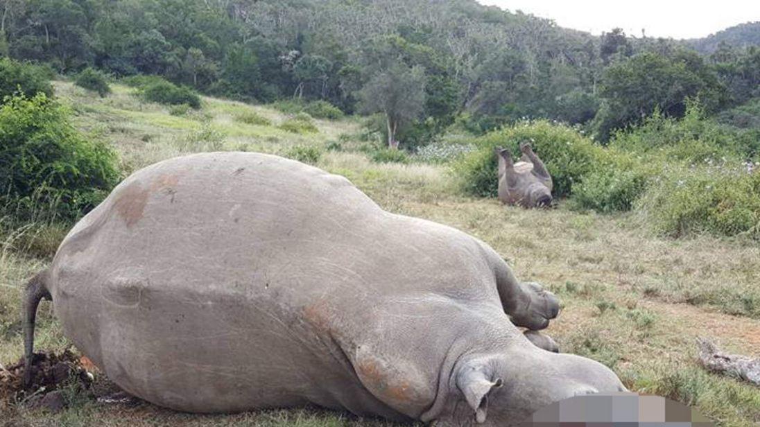 Rhino killed by poachers