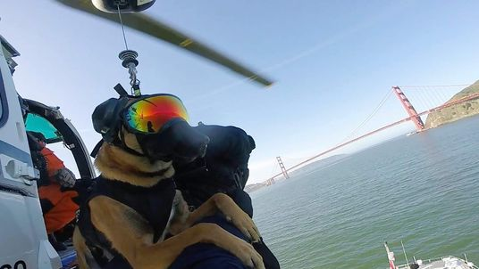 US Coast Guard canine takes part in helicopter proficiency training in San Francisco Bay, California
