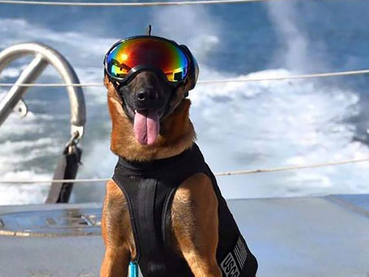 US Coast Guard canine takes part in training in San Francisco Bay, California