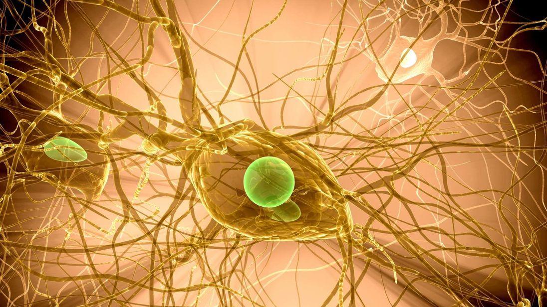Brain Cell Multiple Sclerosis