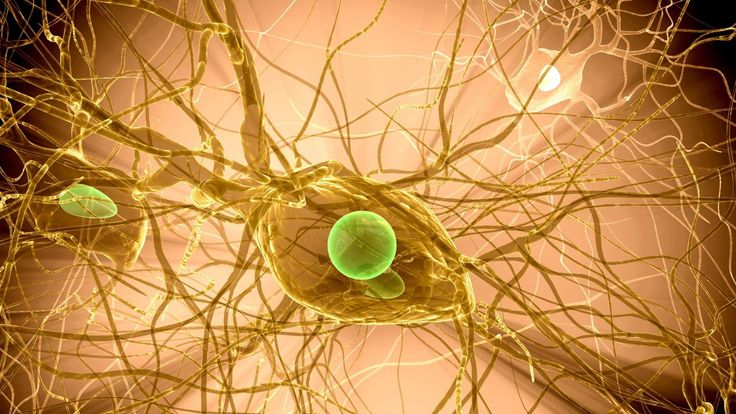 Brain Cell Multiple Sclerosis