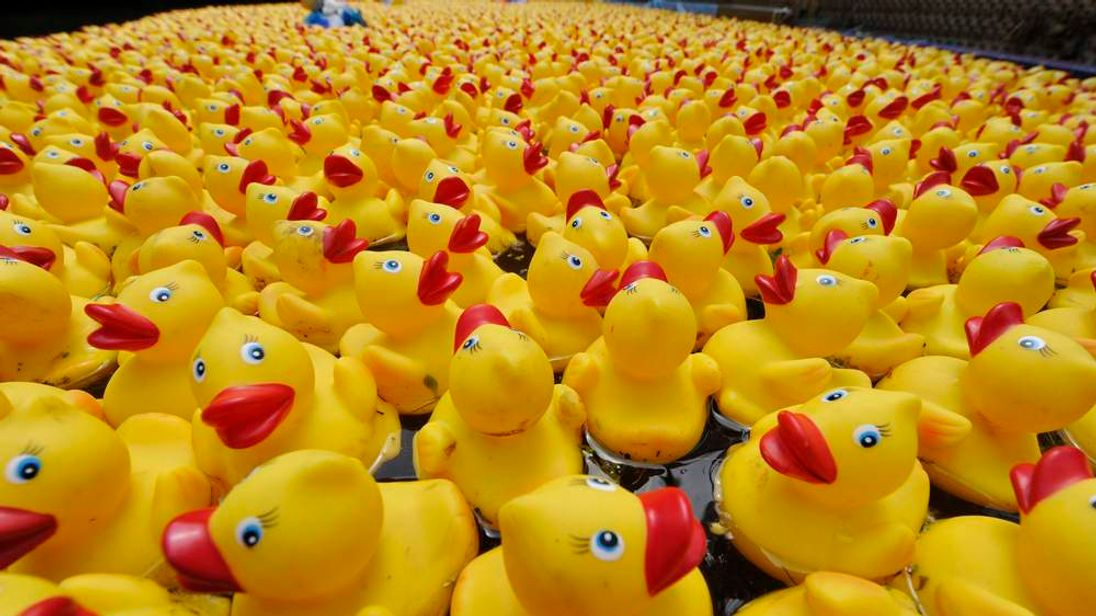 6500 yellow rubber-ducks are released on