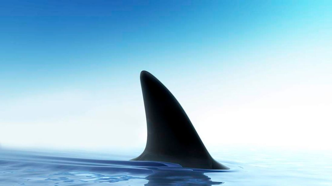 Shark Fin Above The Water