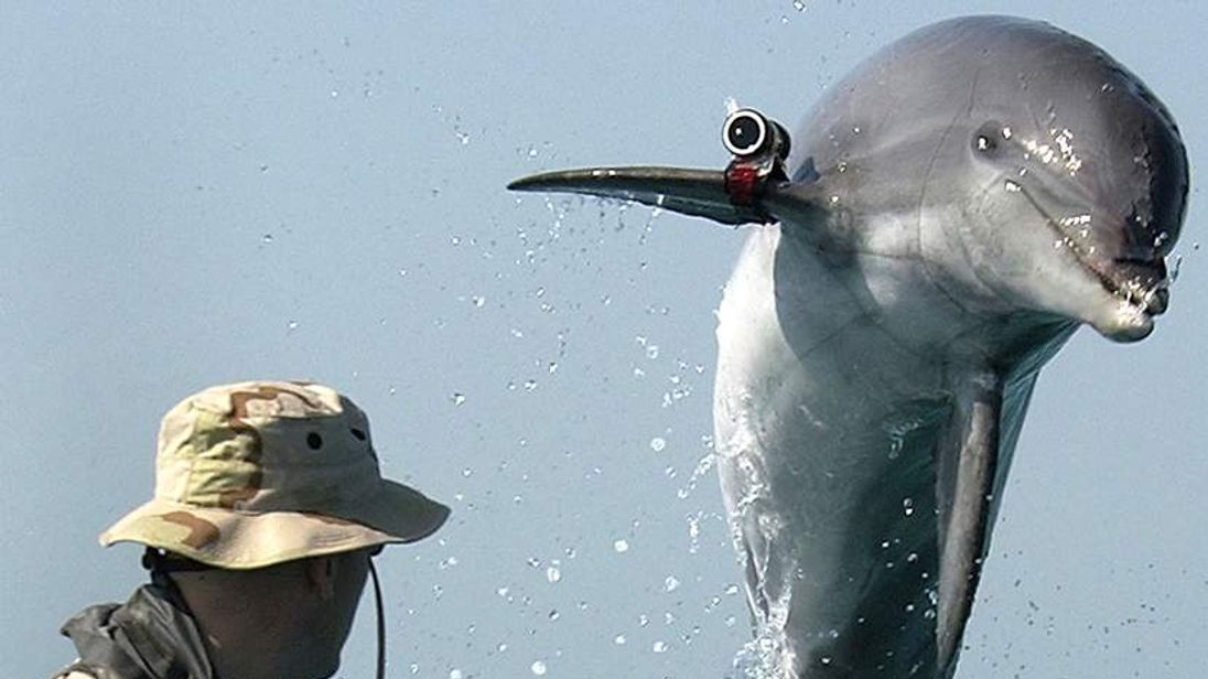 Coalition Forces Train Dolphins For Mine Clearing Operations In Persian Gulf