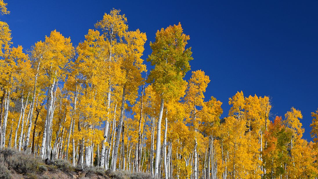 The forest in Utah is the world's largest living thing