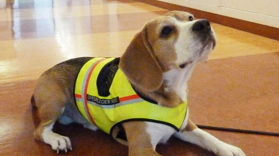 Superbug Sniffer Dog