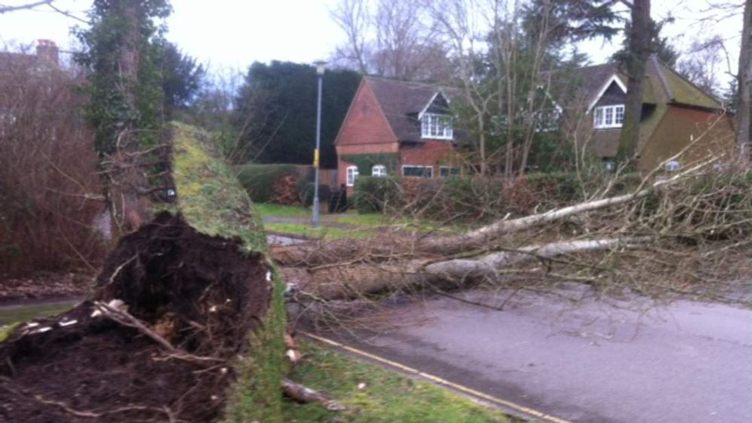 The roots of this tree in Beaconsfield reveal the full power of the storm