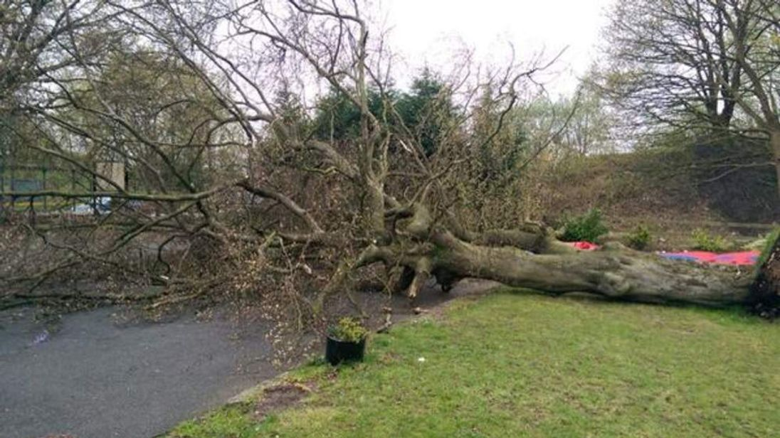 Tree falls outside pub on Wigan Rd, Hindley (CREDIT: Manchester Fire Service)