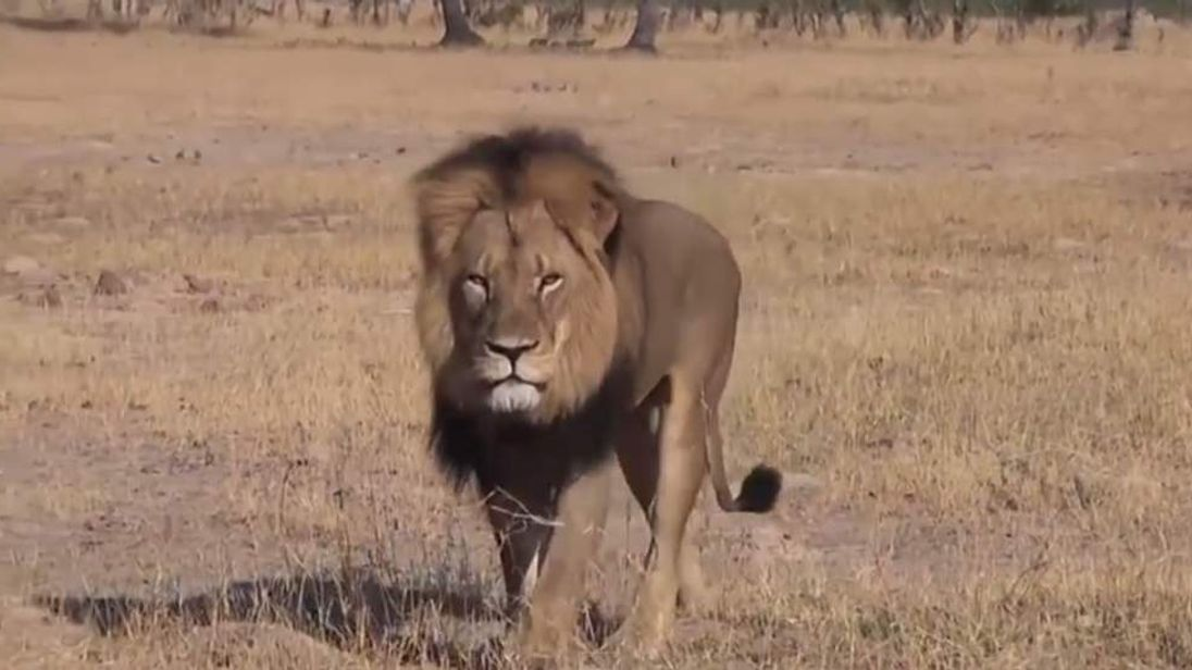 YouTube: Cecil the lion