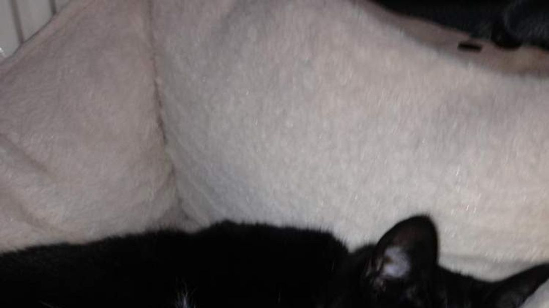 Matt Woolass' cat Tash was put down after it was shot with a weapon thought to have been a crossbow