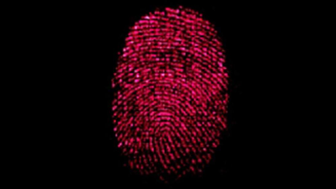 The unique identifying parts of a fingerprint