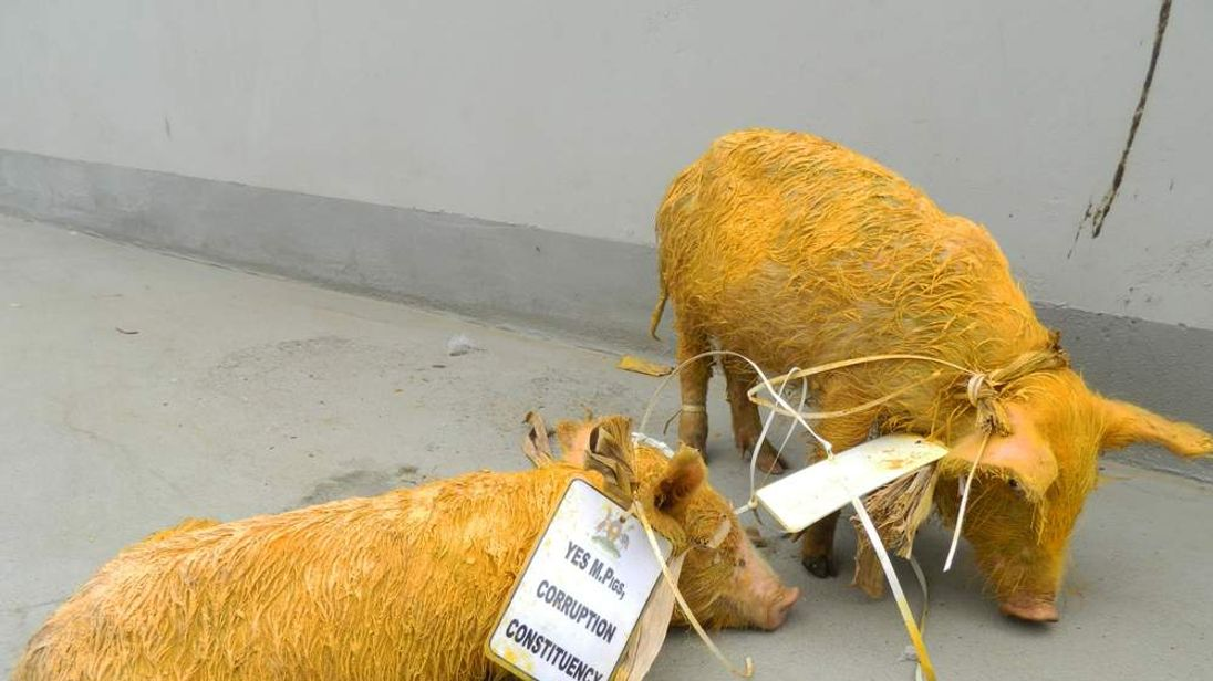 Terror piglet probe