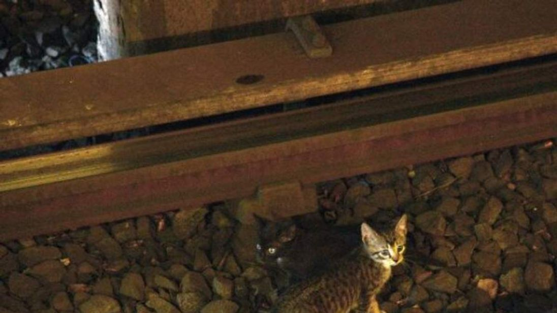 A picture tweeted by the Metropolitan Transit Authority of a Kitten on the track of the New York subway