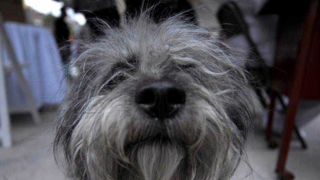 dog awaiting vaccination