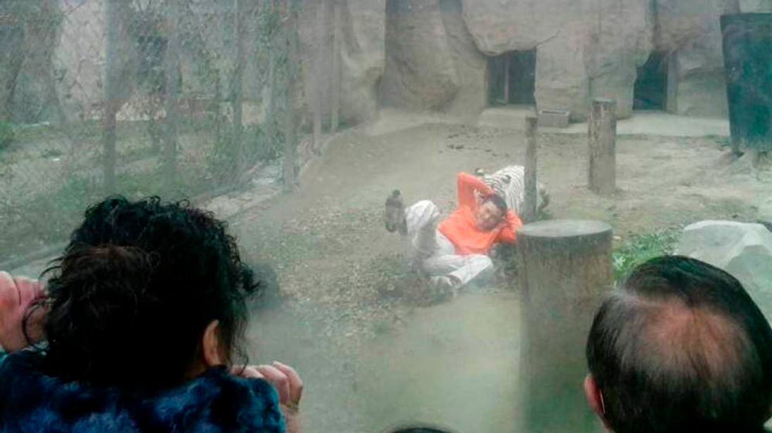A female Bengali white tiger drags a man by his shirt after the man climbed into the enclosure, at a zoo in Chengdu