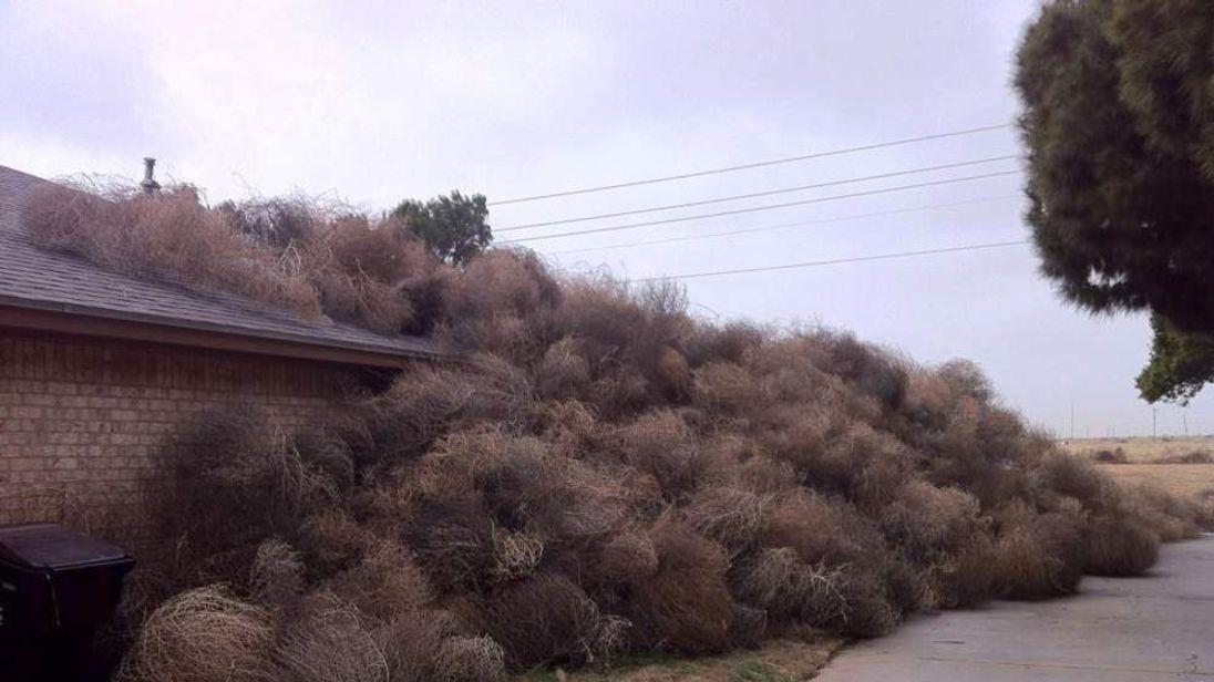 Tumbleweeds cover Texas home KWES-TV