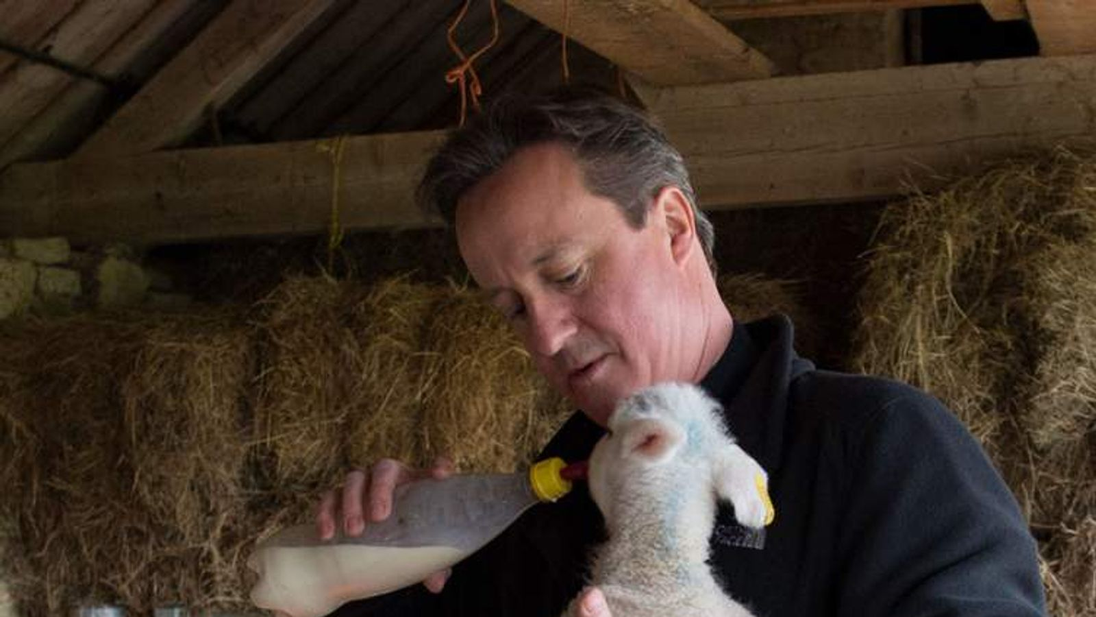 Prime Minister David Cameron helps to feed a newborn lamb
