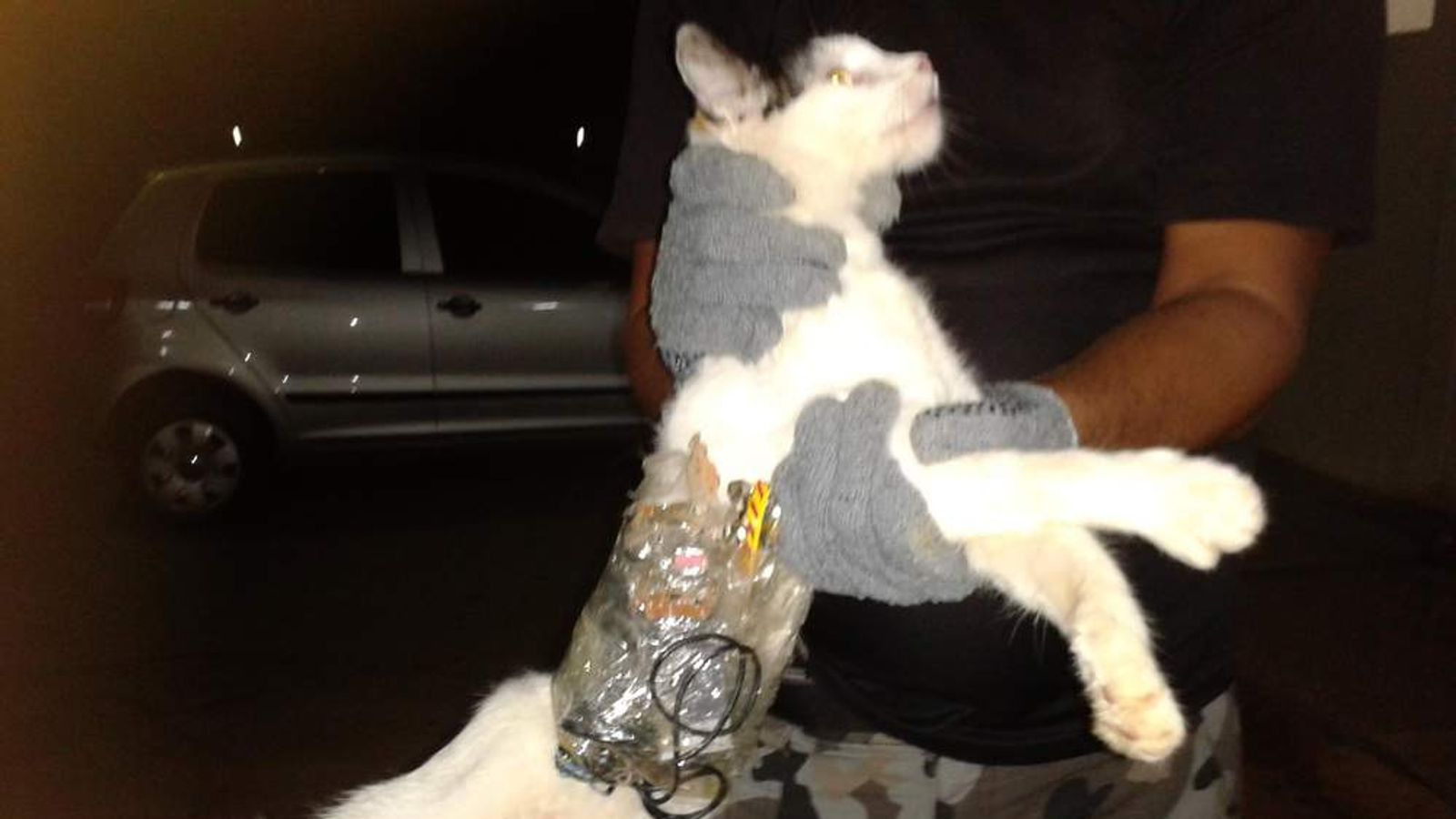 Guards hold a cat that has items taped to its body at a medium-security prison in Arapiraca, Brazil