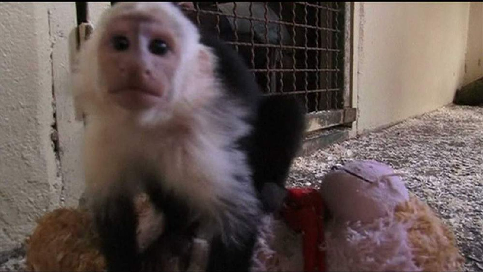Mally the monkey