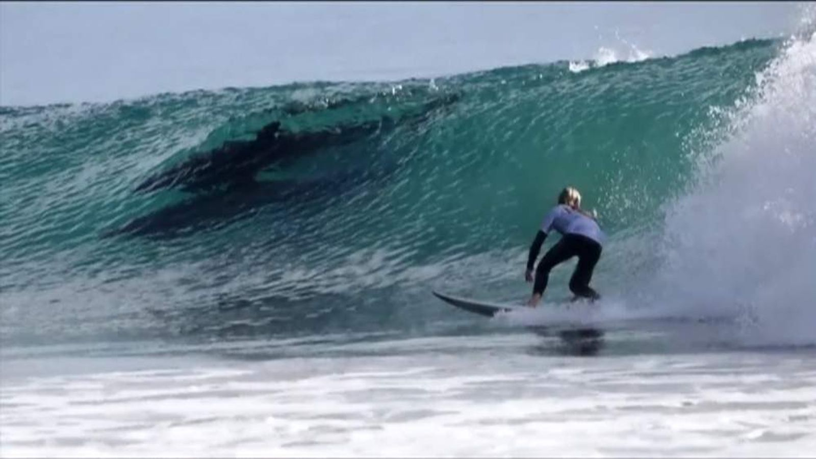 California surfing dolphins
