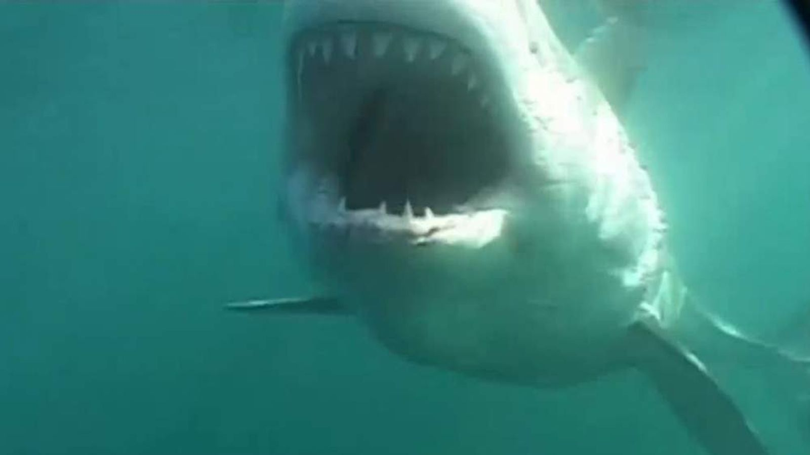 New technology being developed to prevent fatal shark attacks