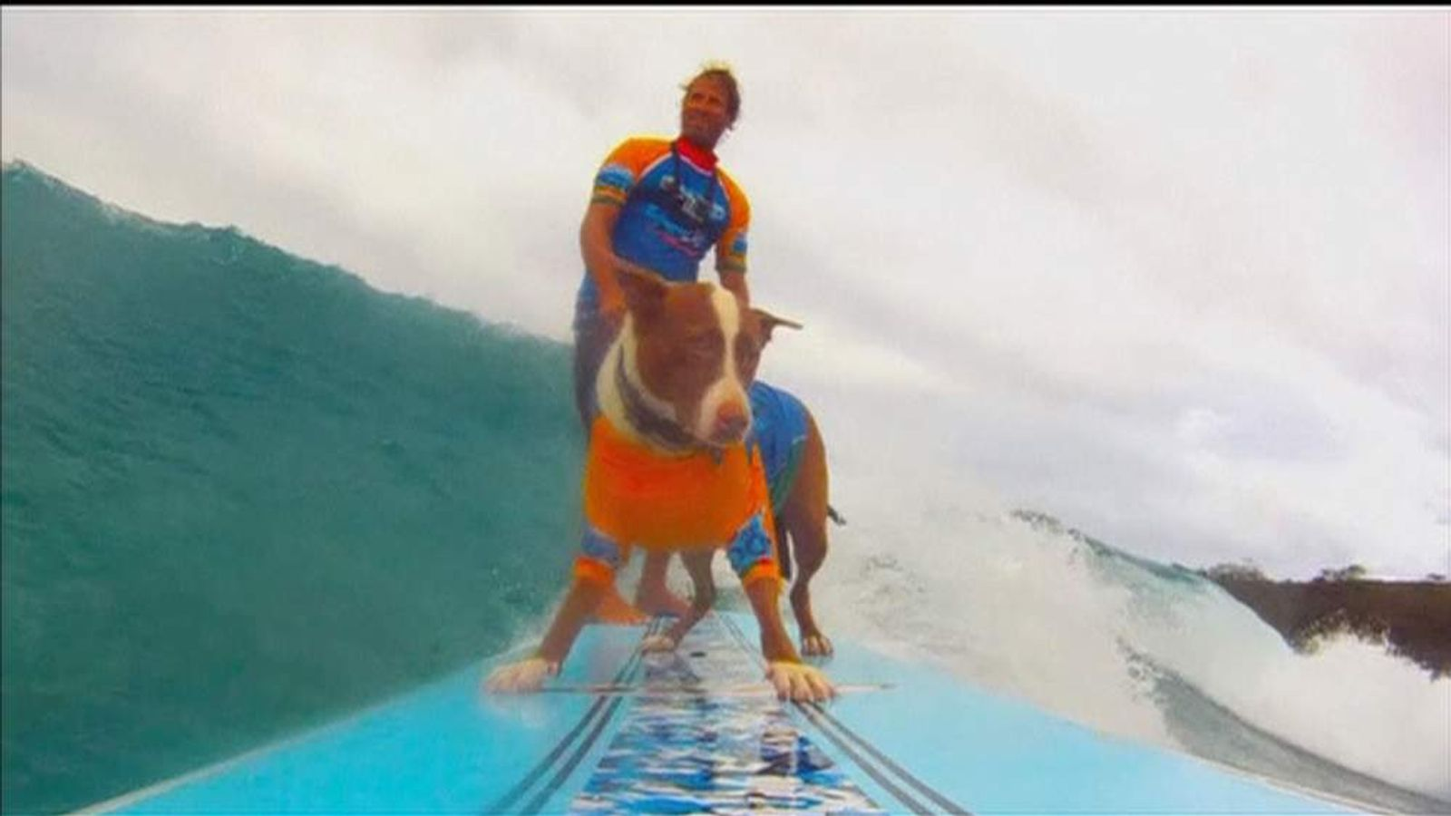 Longboarders and dogs take to the waves at the Noosa Surf Festival