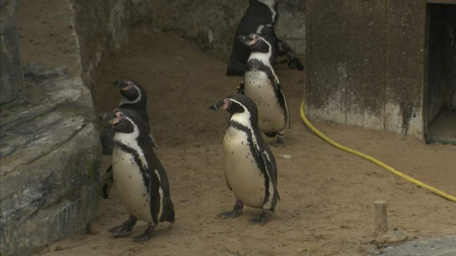 Penguins pool polluted