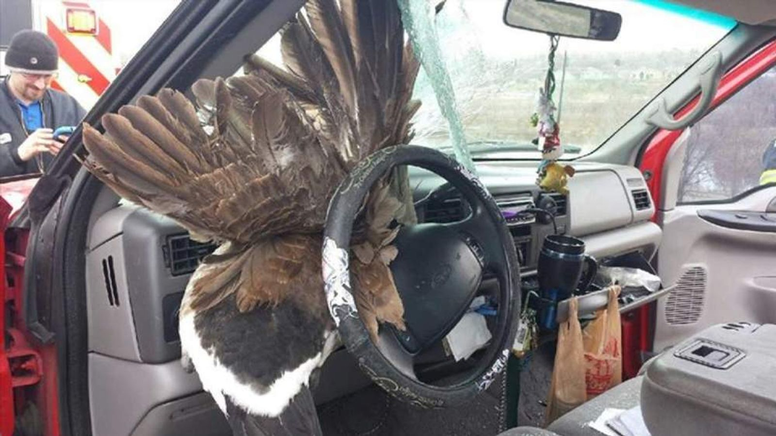 Goose crashes through windscreen in Colorado