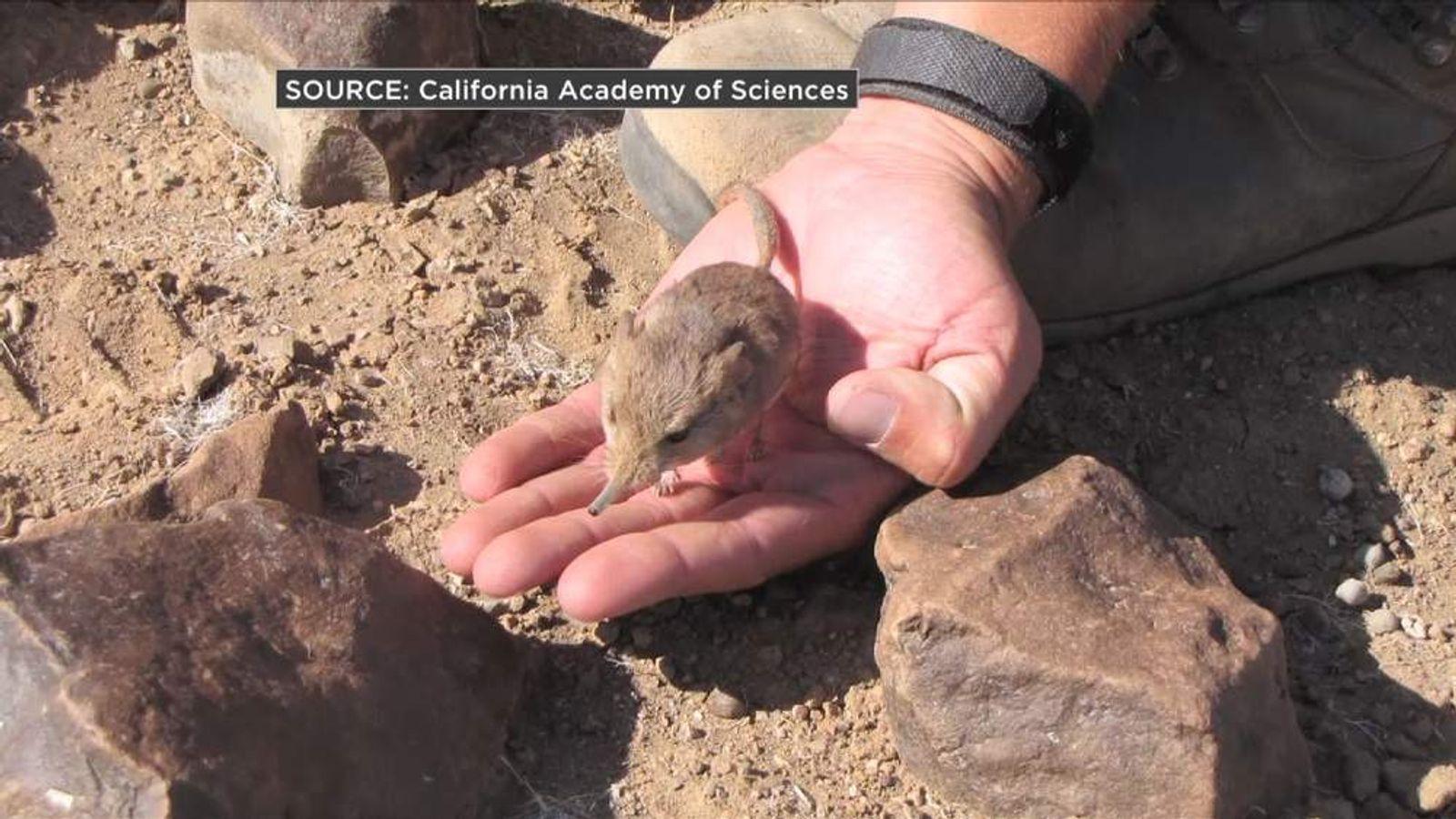 New elephant shrew species discovered