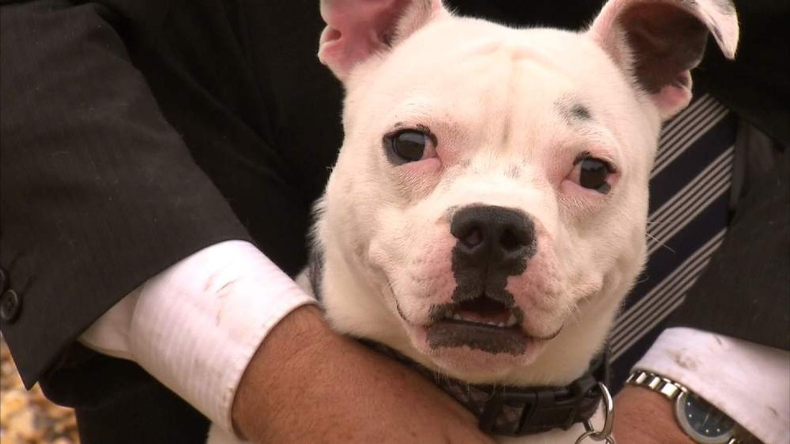 Dog rescued from Manchester dogs' home fire