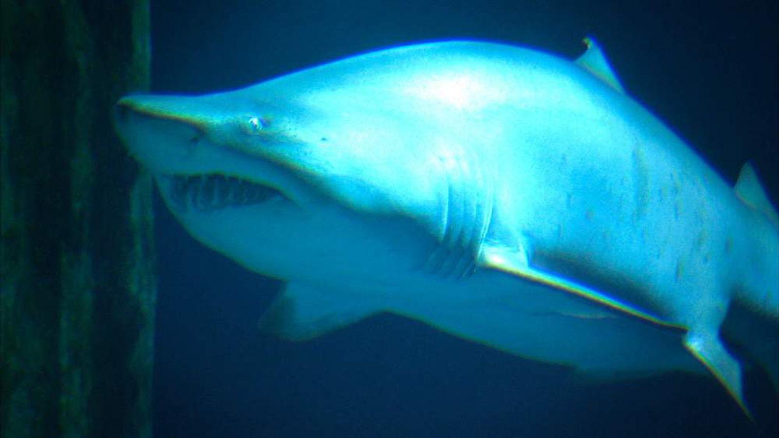 A shark as seen in this week's Swipe programme