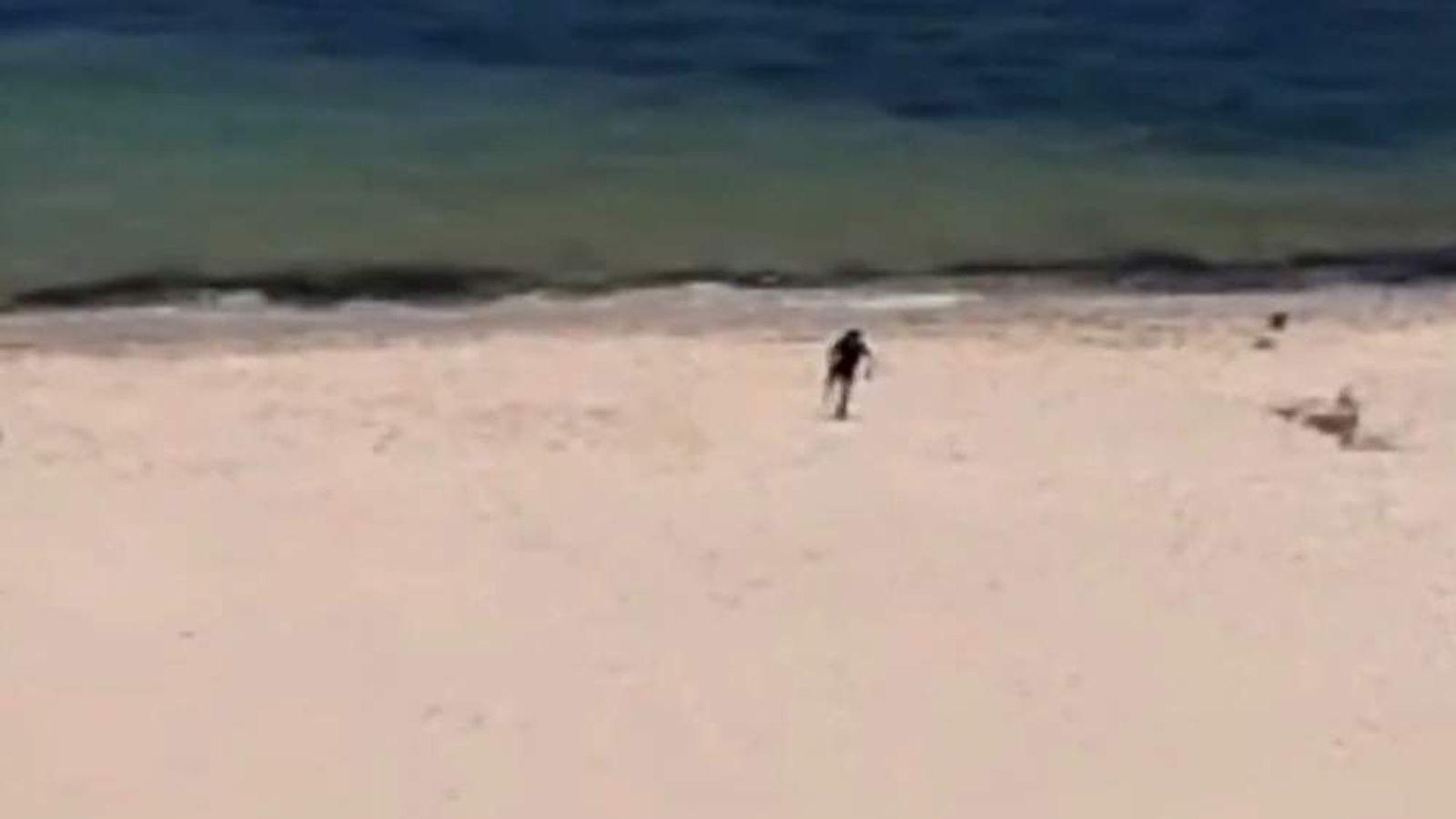 Killer runs down the beach