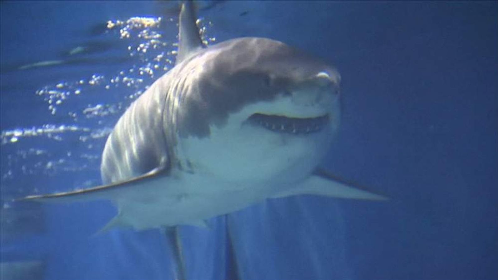Shark dies in Japan aquarium