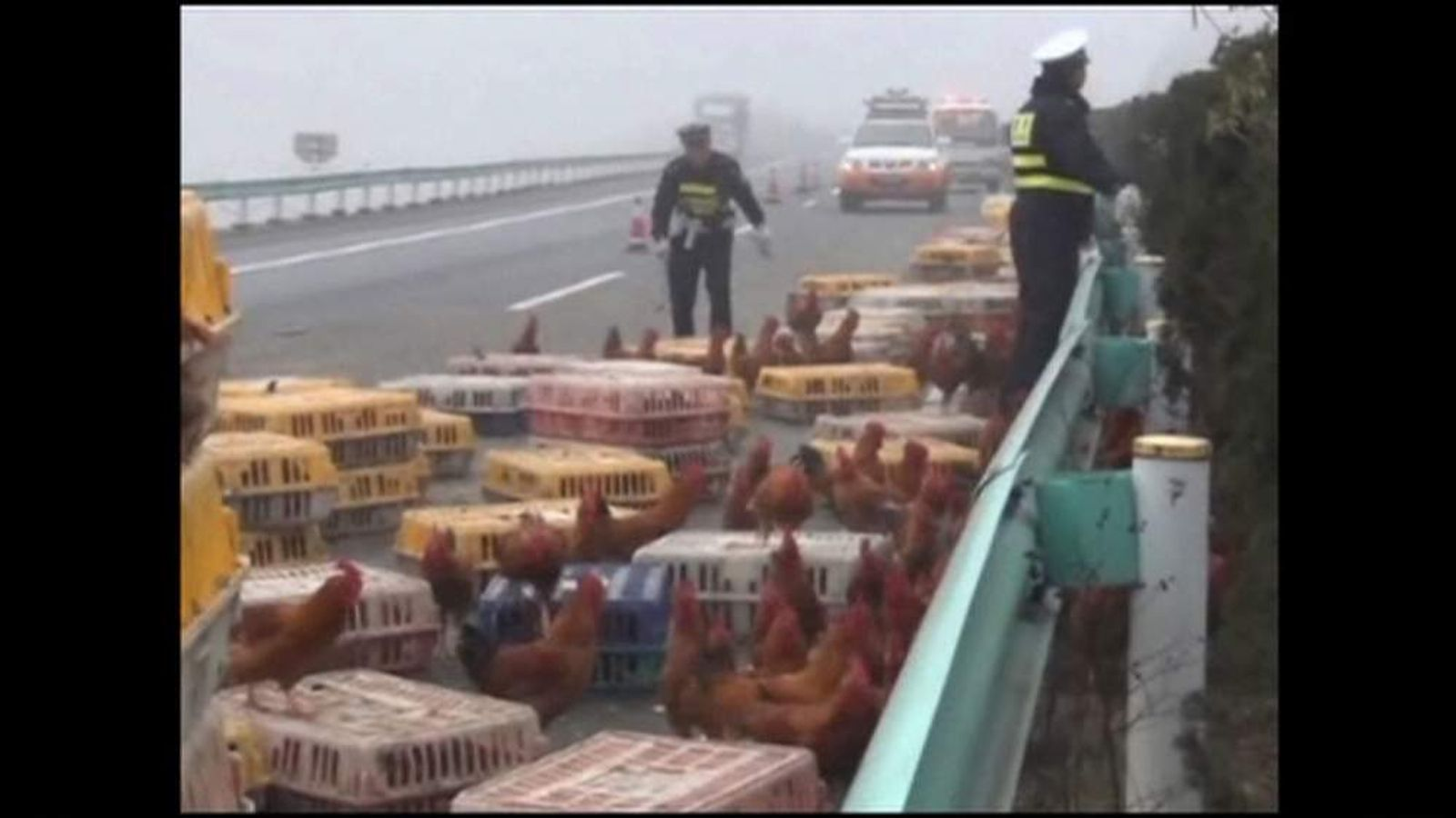 Three thousand chickens on the loose after lorry crash