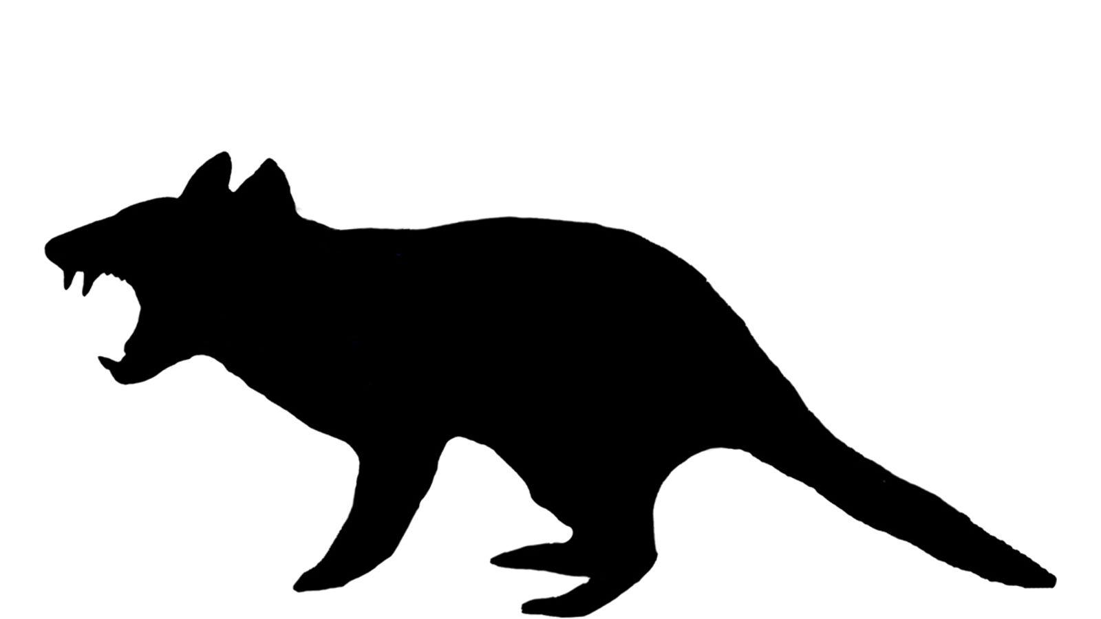 ancient flesh eating beast found in australia tasmanian devil clipart black and white tasmanian devil clipart