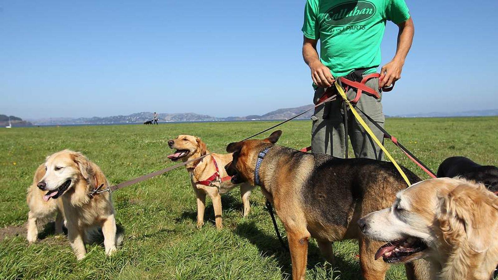 Dog Walker Generic Picture