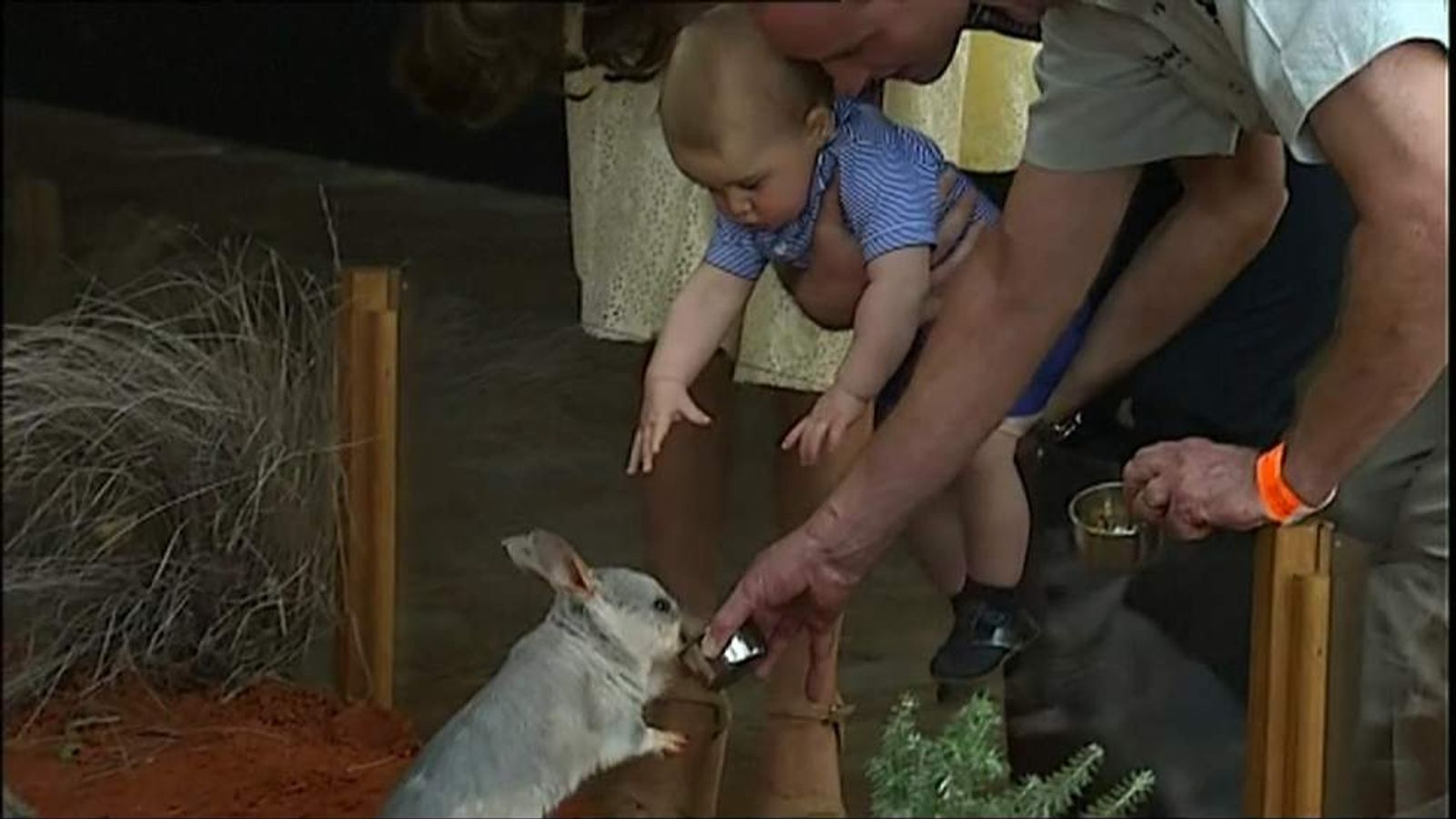 Prince George reaches out to a bilby at Sydney's Taronga Zoo