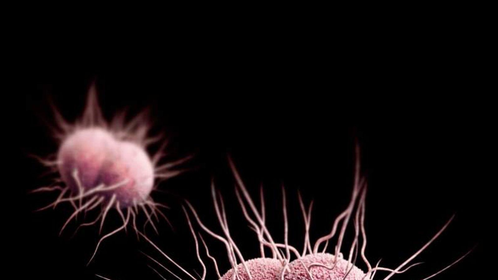 drug-resistant Neisseria gonorrhoeae.