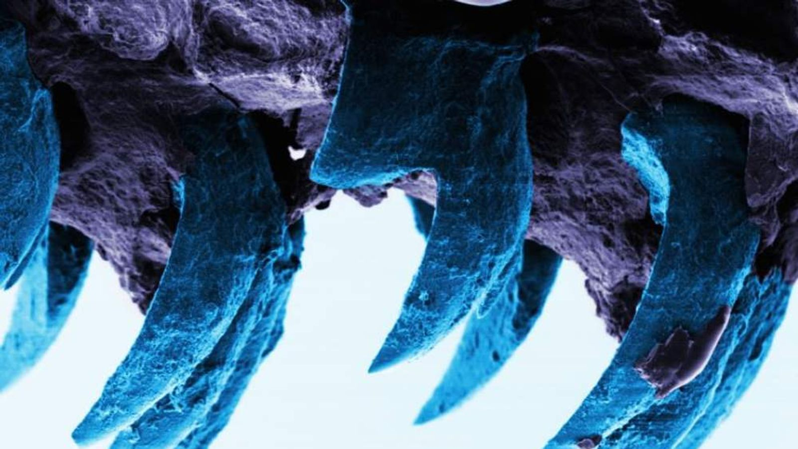 Limpet Teeth Image From University Of Portsmouth