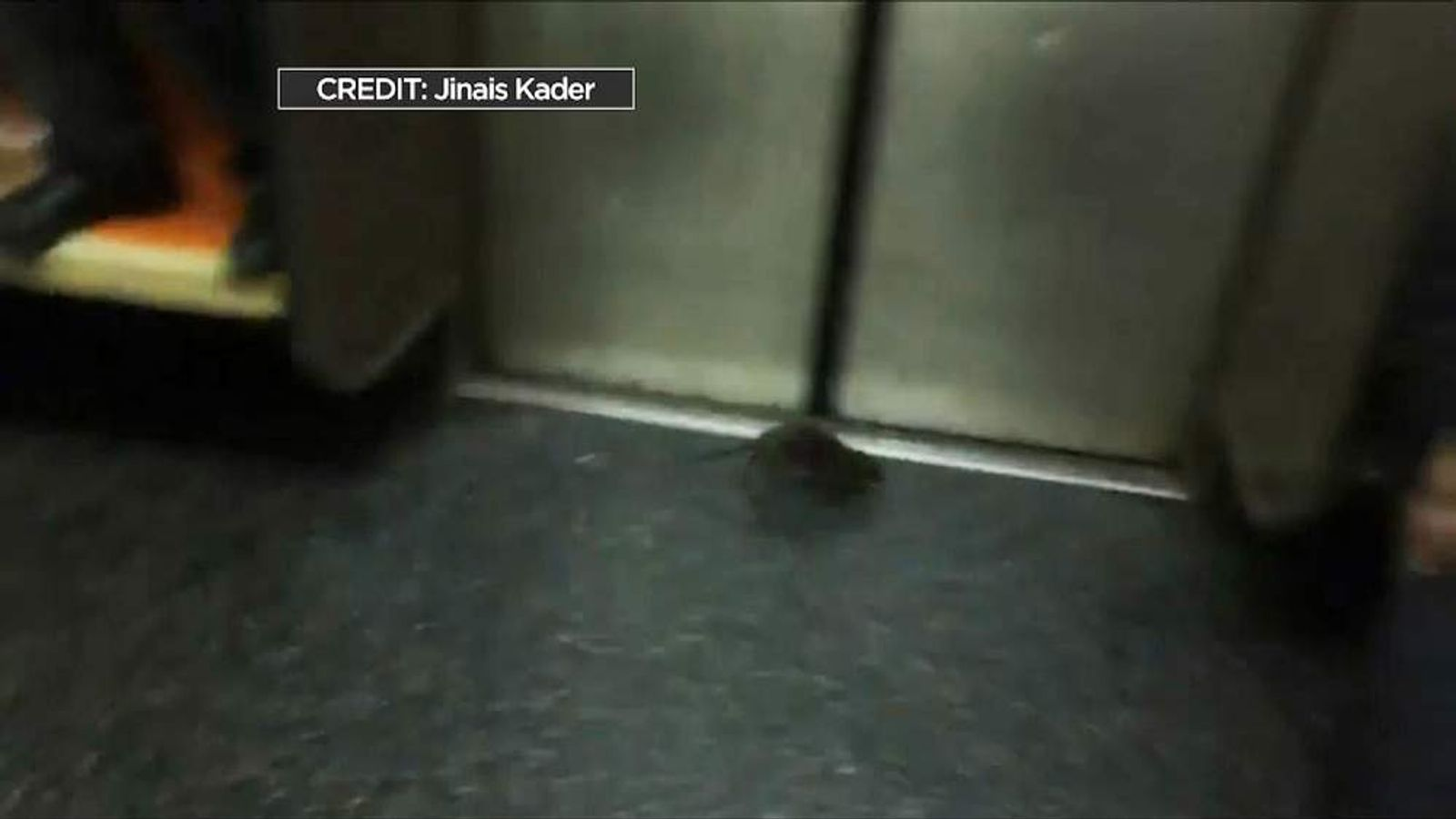 Rat On Train