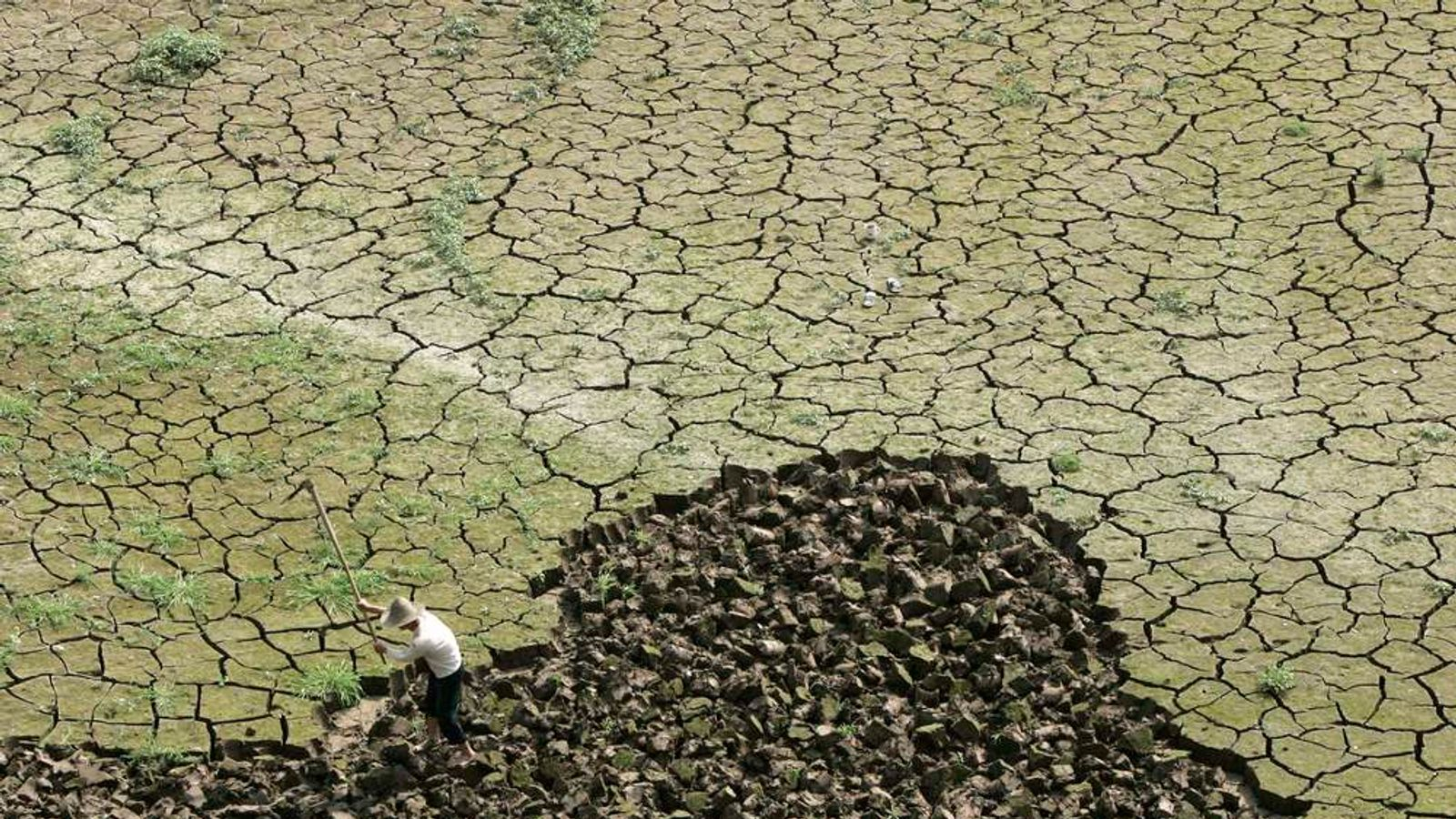 A farmer works on a drought-hit paddy field in the outskirts of Chongqing municipality