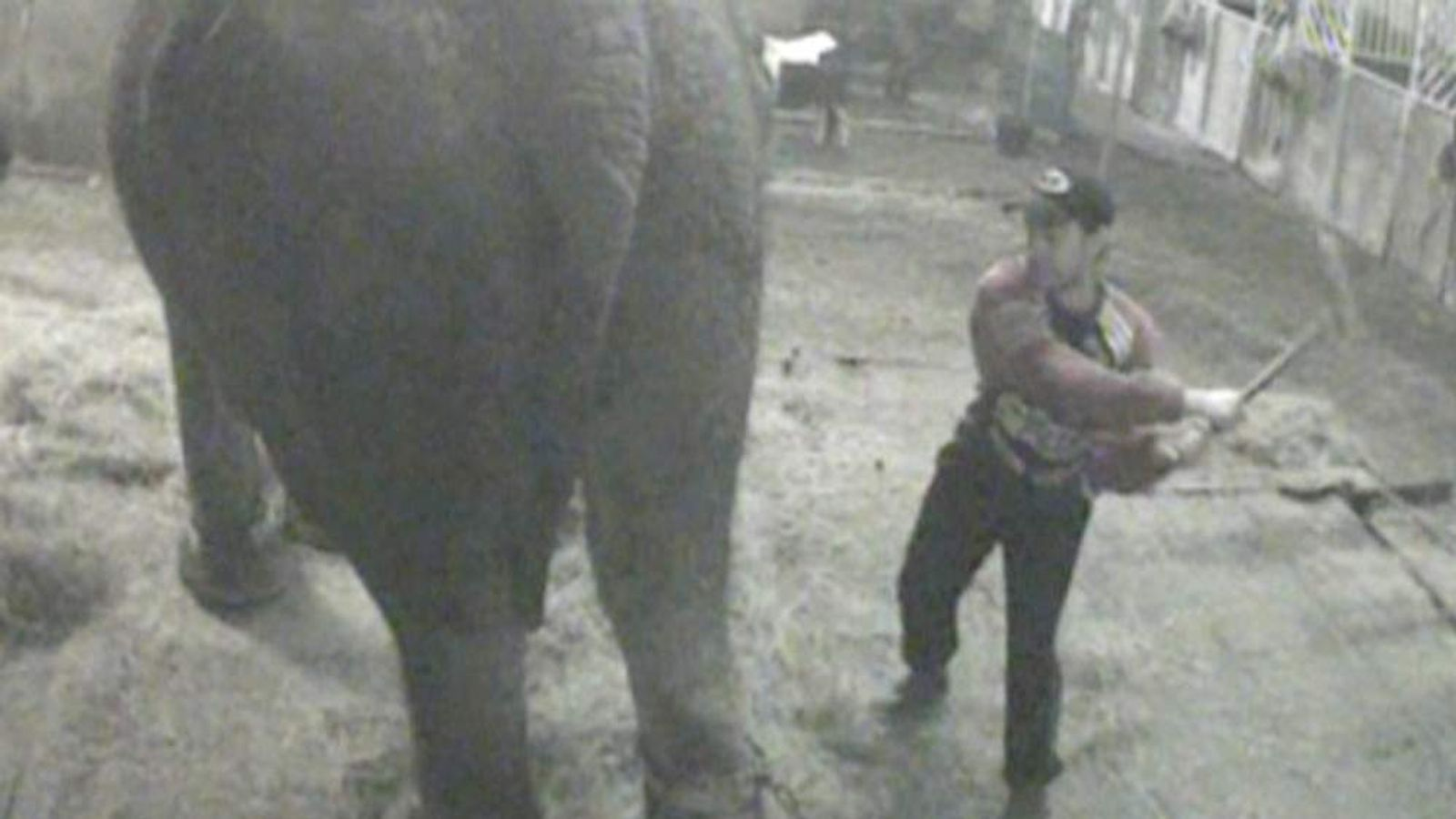 A grab of a video recording of a circus elephant being hit