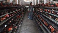 China bird flu outbreak