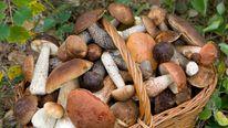 Mushroom basket file photo